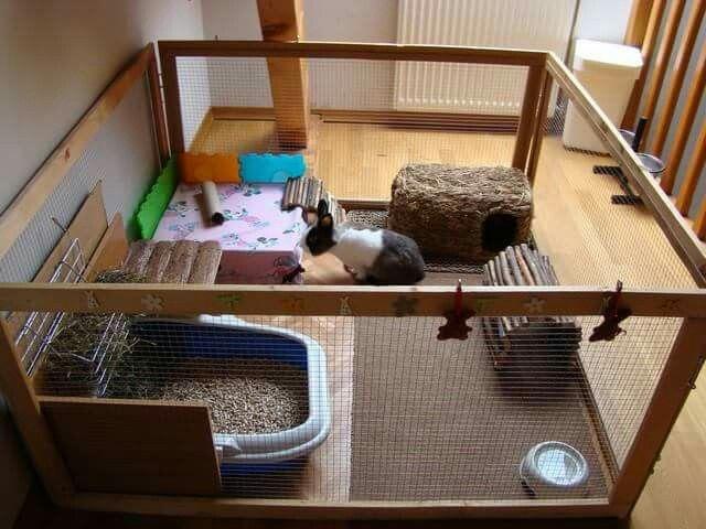 enclos diy pinterest cochon d 39 inde house ideas et rabbit cages. Black Bedroom Furniture Sets. Home Design Ideas