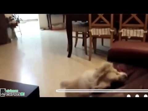 kuando tu perro no es tan genial - YouTube