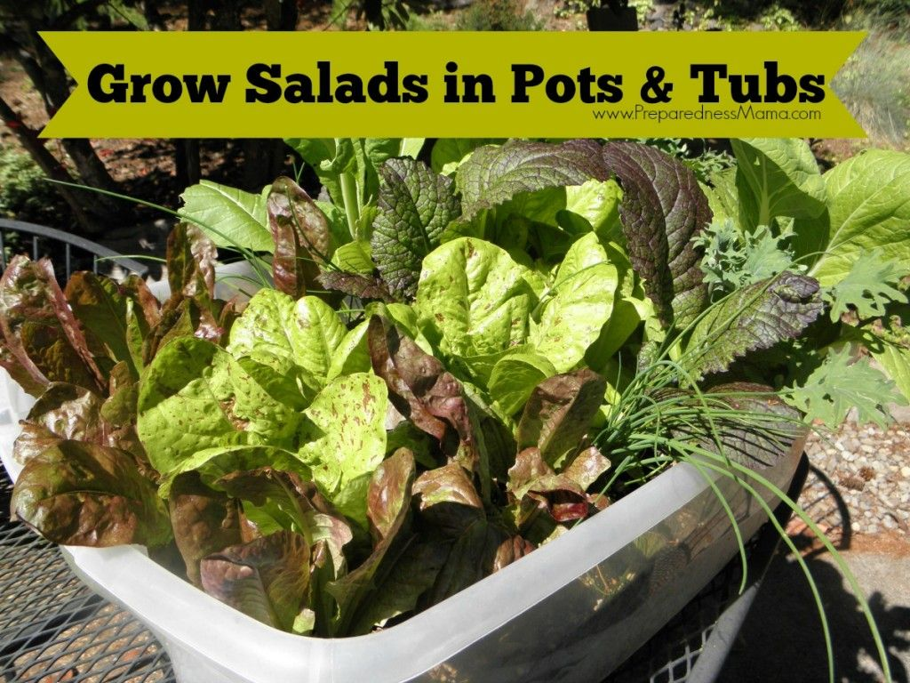 Growing lettuce in a pot - For Under 10 You Can Have A Meal For Months Grow Salads In Pots