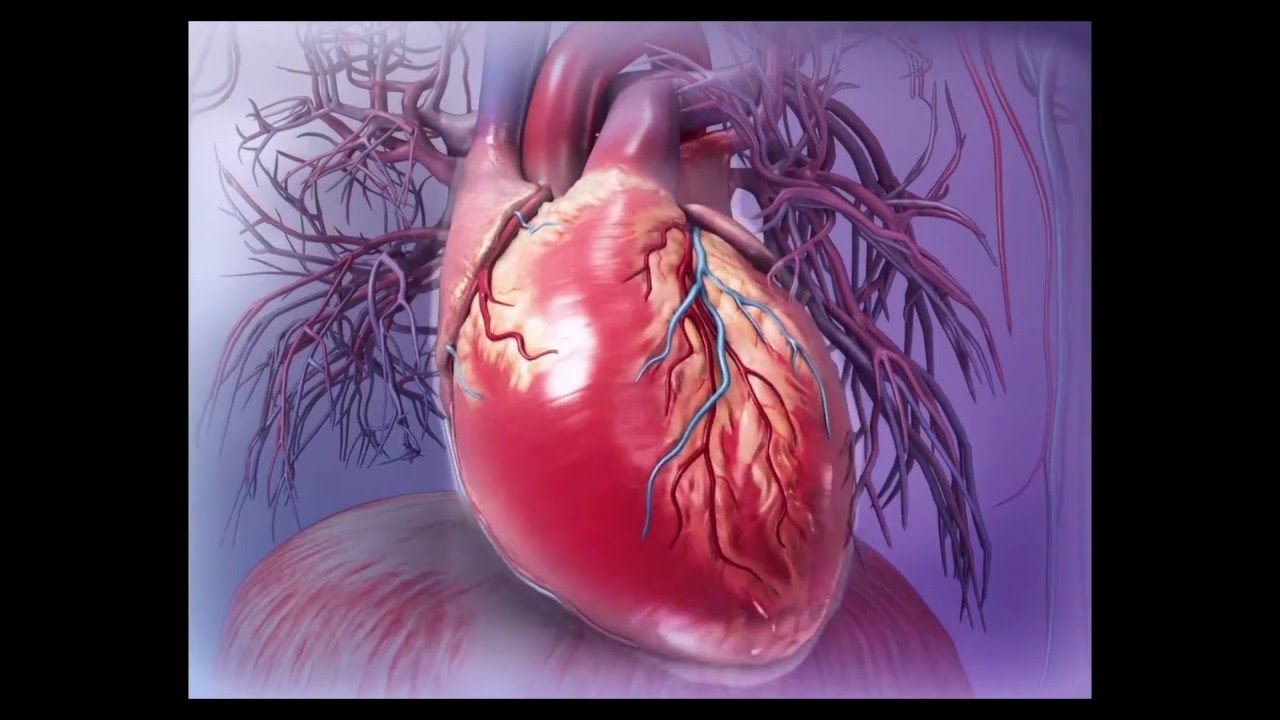 Virtual 3d Heart Dissection With Human Anatomy Atlas School
