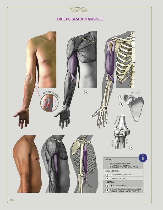 Anatomy Next - store - SOFTCOVER + EBOOK + PDF download | Refs ...