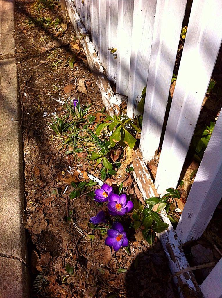Spring flowers!!!!