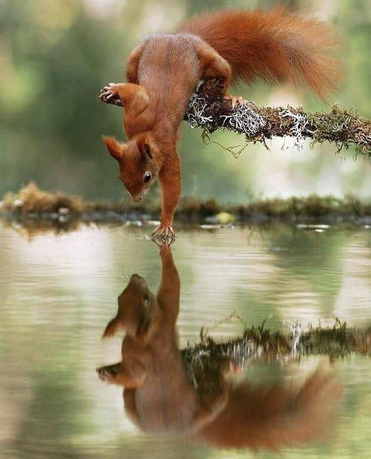 This squirrel touching water | Animals wild, Nature animals, Cute ...