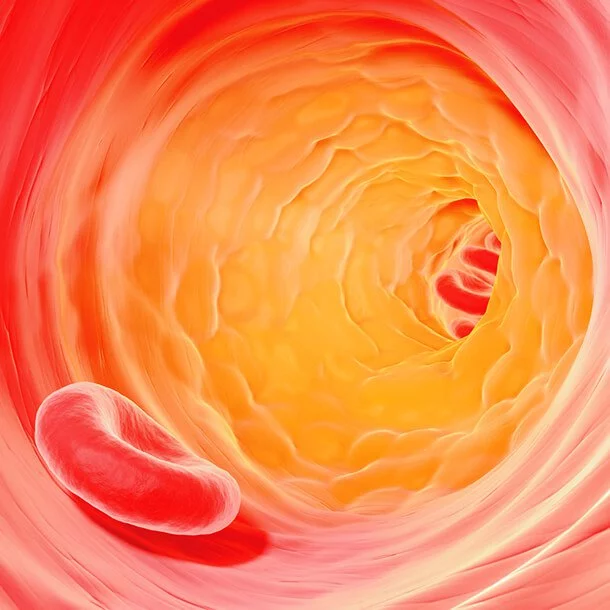 Cholesterol Levels What the Numbers Mean Coronary