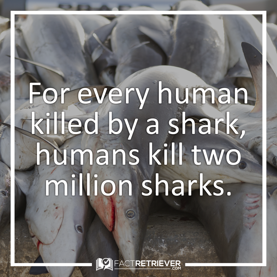 81 Interesting Facts About Sharks