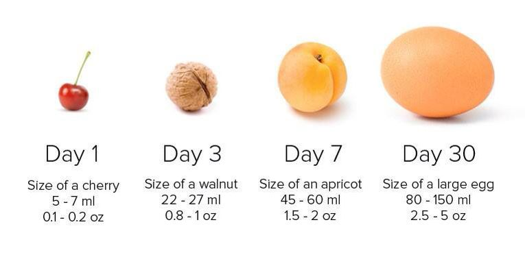 Newborn stomach size with fruit for comparison