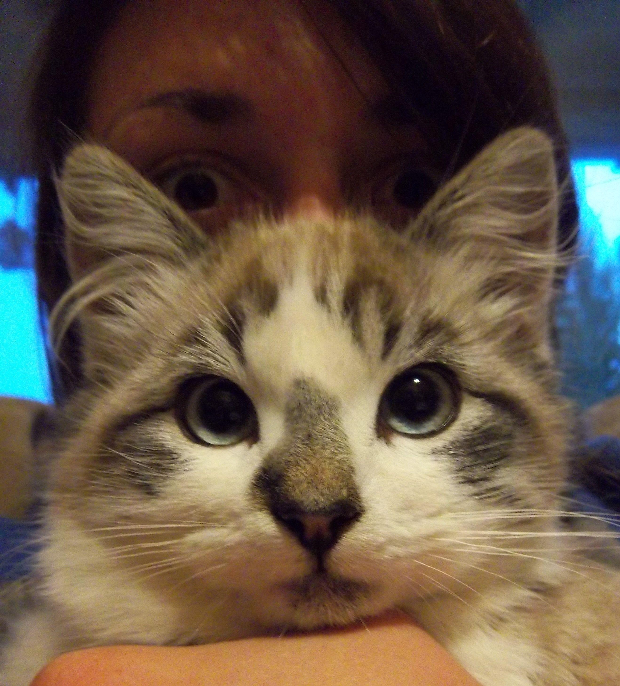 Gato Cara Katzen