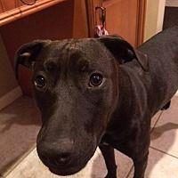 Panama City Fl Terrier Unknown Type Medium Meet Leigh A Pet For Adoption Pets Pet Adoption Dog Adoption
