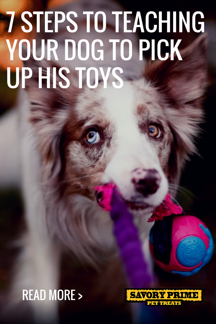 7 Steps To Teaching Your Dog To Pick Up His Toys Training Your