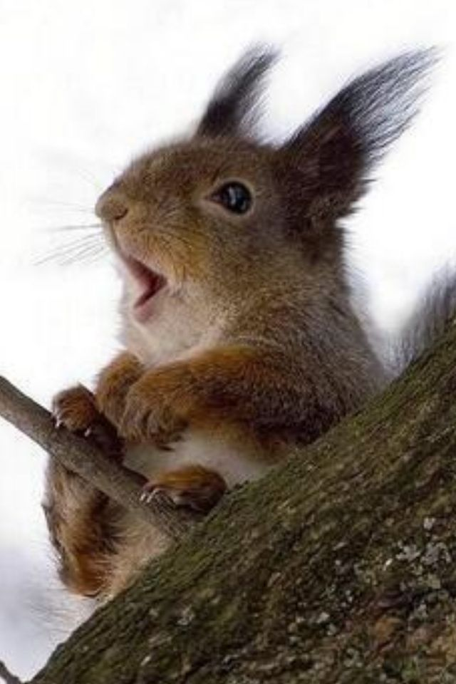 Image result for squirrel wind