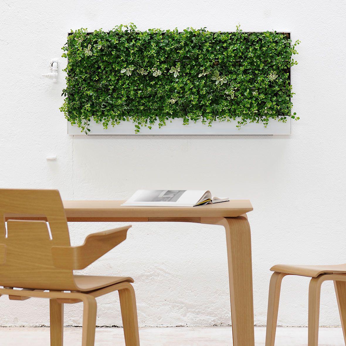 Hydroplant Pflanzen Innenbereich I Bei Bestswiss Pflanzen Grüne Kunst Pflanzen Ohne Erde