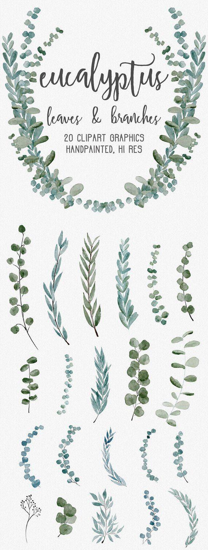 WATERCOLOR EUCALYPTUS GRAPHICS, gewerbliche Nutzung, gedämpfte Aquarellblumen, Eukalyptus-Cliparts, Kränze, moderne Pflanzenblätter #whiteweddingflowers