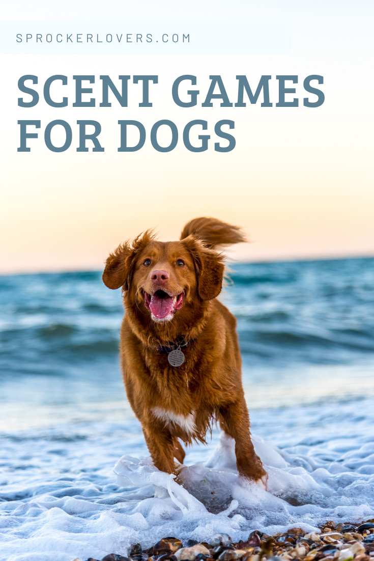 Learn About A Dog S Sense Of Smell 5 Fun Nose Work Games To Play Pet Insurance Dogs