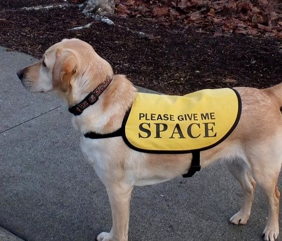Jacket Vest For Dogs Working On Issues Please By Giveadogahome