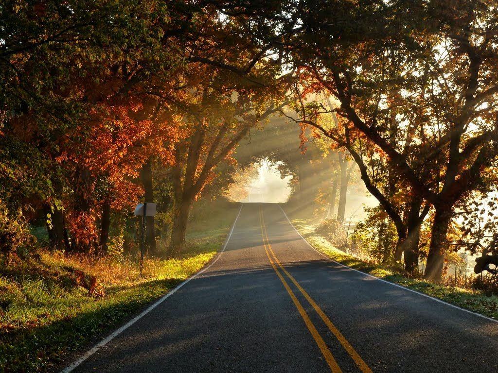 Free Wallpapers Collection of Road and Trees Wallpapers