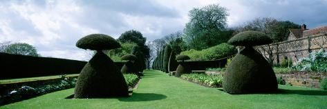 Hedge in a formal garden, Hinton Ampner Garden, Alresford ...