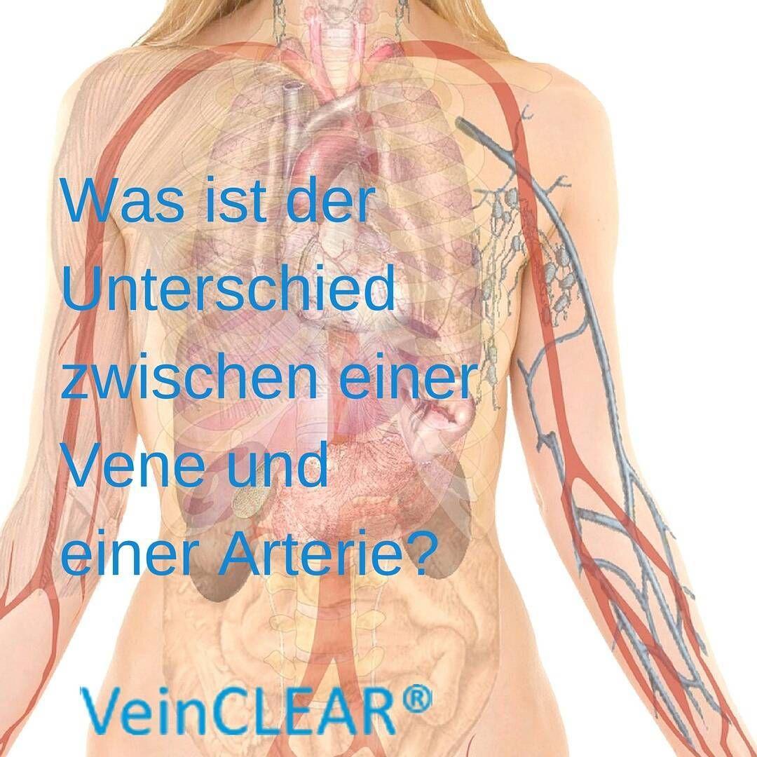 Arterien und Venen sind Blutgefäße des Körpers, die das Blut durch ...
