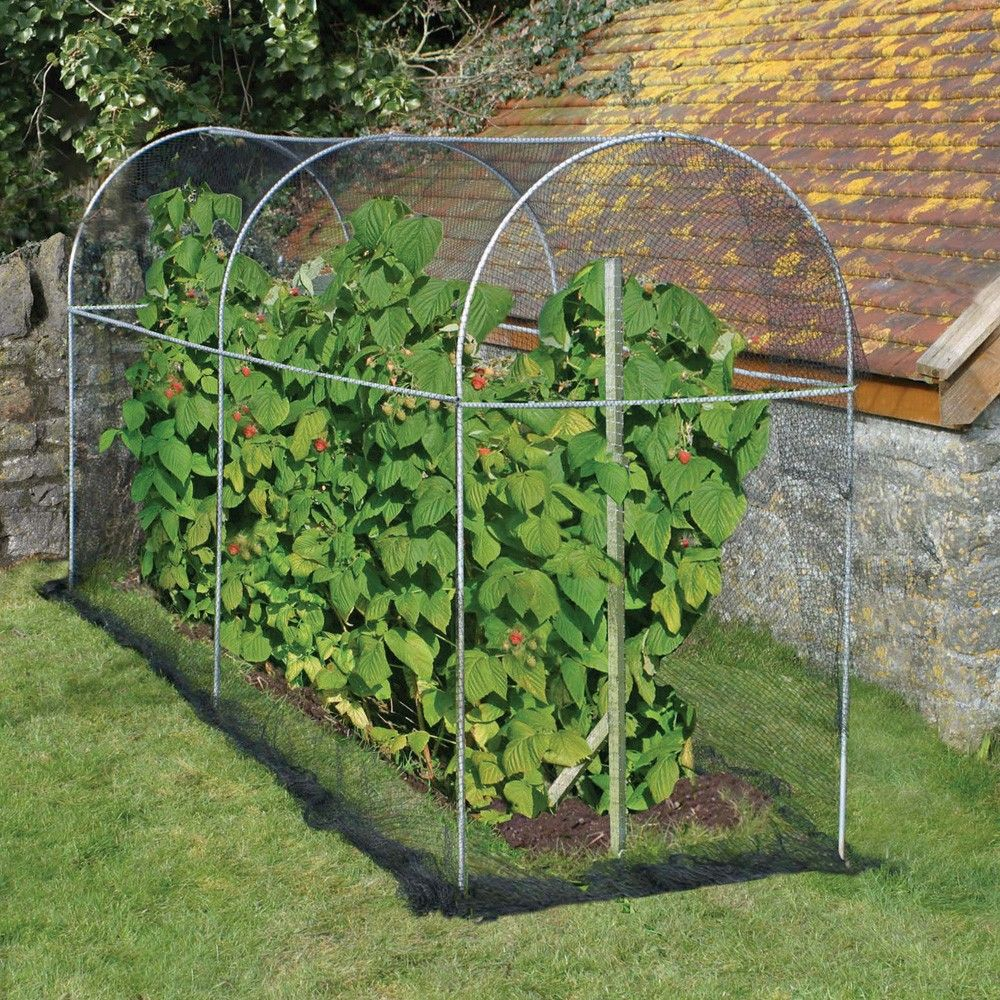 Long Domed Roof Fruit Cage Fruit Cage Garden Netting