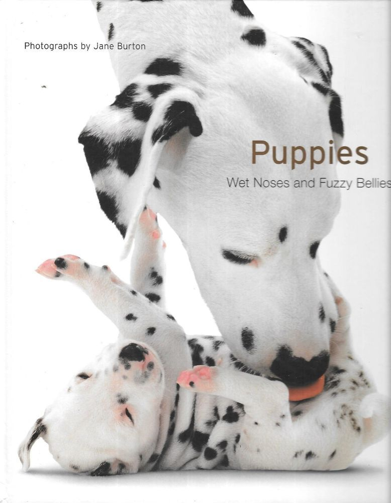 Image result for puppies wet noses and fuzzy bellies