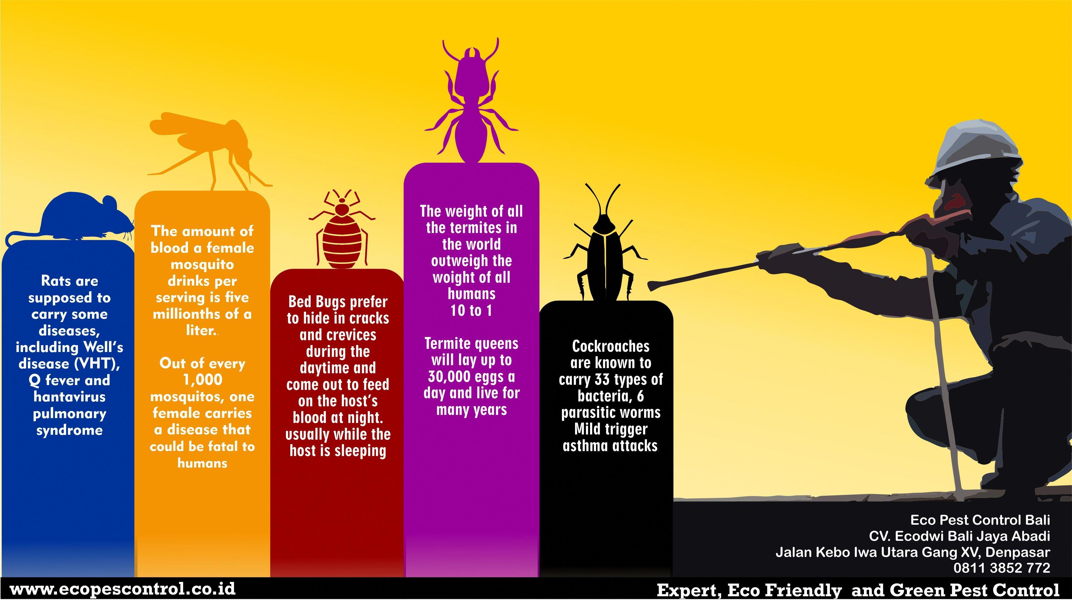 Pin Di Best Pest Extermination
