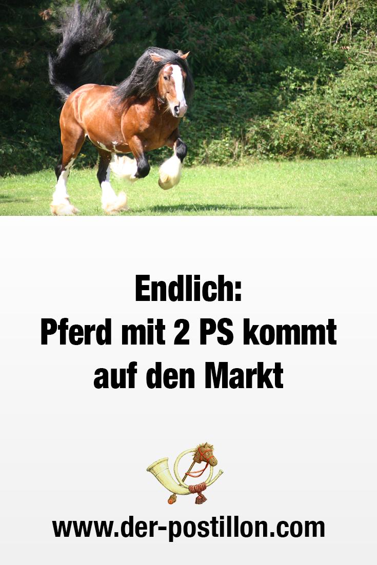 Endlich: Pferd mit 2 PS kommt auf den Markt   Witzige ...