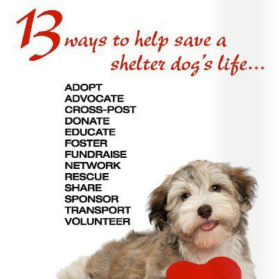 keep calm and help the stray   13 ways but doing only 1 of them will Stop Animal Cruelty *Friends of HCAS Inc.