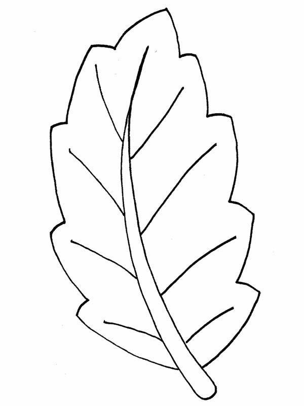 Pot Autumn Leaves Coloring Pages : Bulk Color   Leaf ...