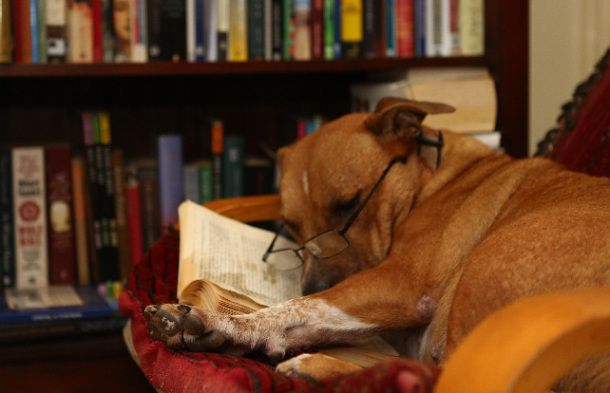 Good dog with a good book !! Looks like a good reader!!!!!