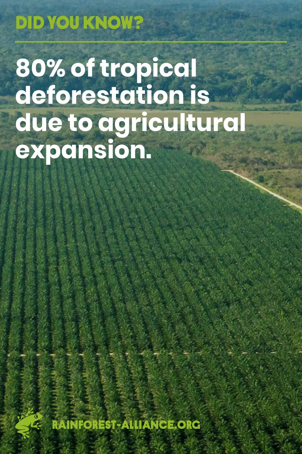 From Brazil to Indonesia, big agribusiness is razing huge