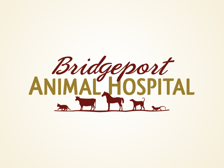 Veterinary Logo Design By Http Www Beyondindigopets Com