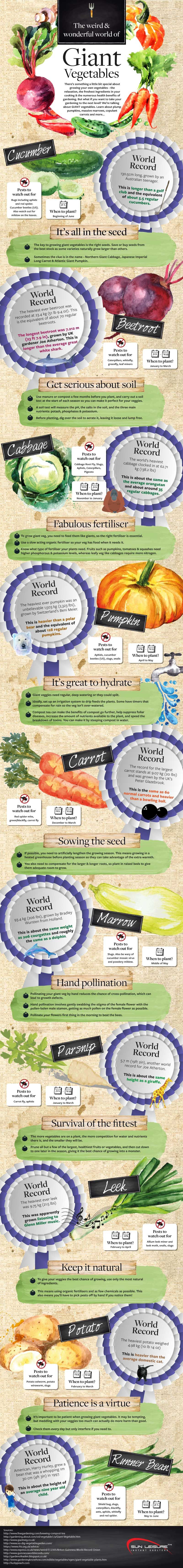 The Weird and Wonderful World Of Giant Vegetables #Infographic