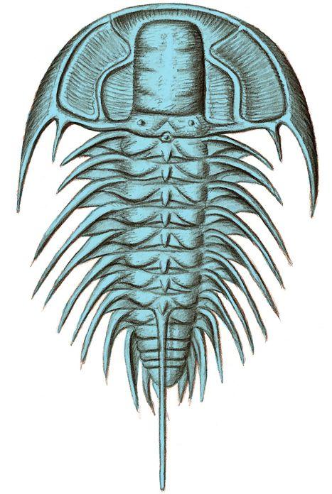Mackenziurus Deedeei Dee Dee Ramone A Species Of Trilobite