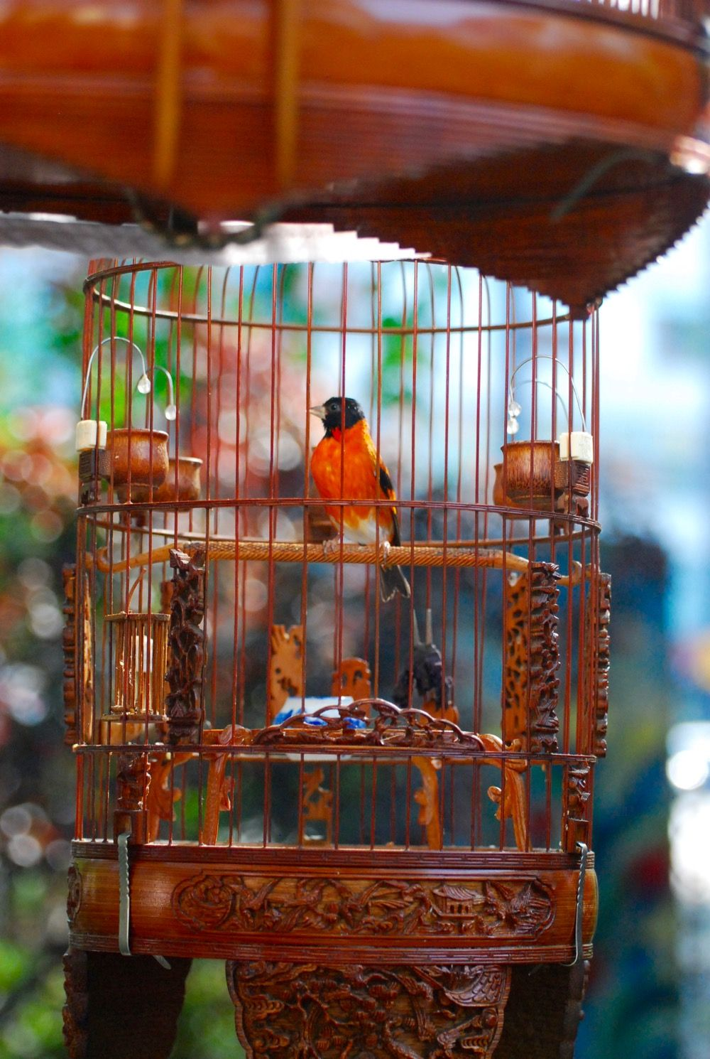 Hua Mei Bird Garden | Pinterest | Lower east side and City