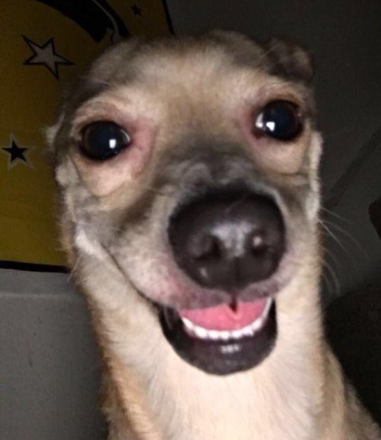 Holi No Puedo Dormir In 2020 Funny Dog Memes Funny Animal Memes Cute Animal Memes