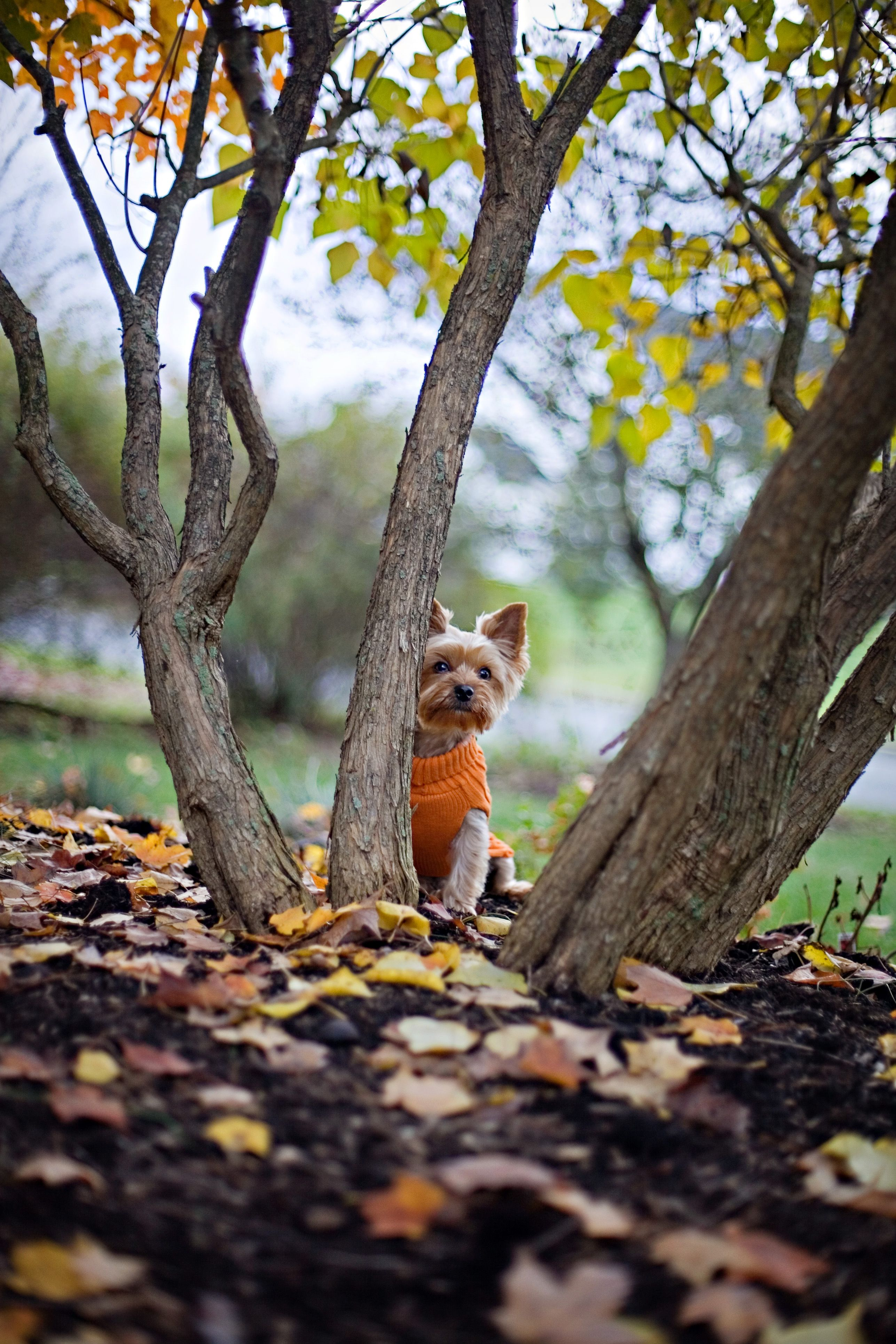 Photo By April Ziegler Photography Dogs Dogs Dogs