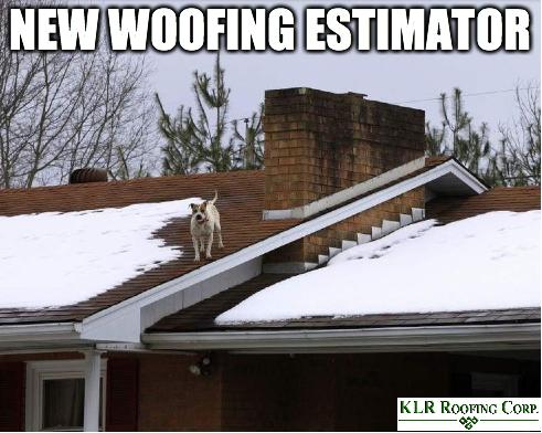roofing meme joke dog on roof Roofing, Modern roofing