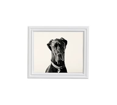Great Dane Framed Print By Jennifer Meyers 11x13 Ridged Distressed Frame White No Mat Great Dane Great Dane Facts Great Dane Dogs