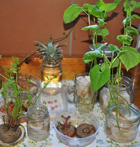Windowsill Gardening
