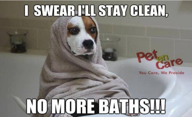 I Swear I Ll Stay Clean No More Baths On Buying Products Of More Than 500 Rs Get A Surprise Gift Hurry Visit Our W Funny Dog Memes Cute Funny Dogs Dogs