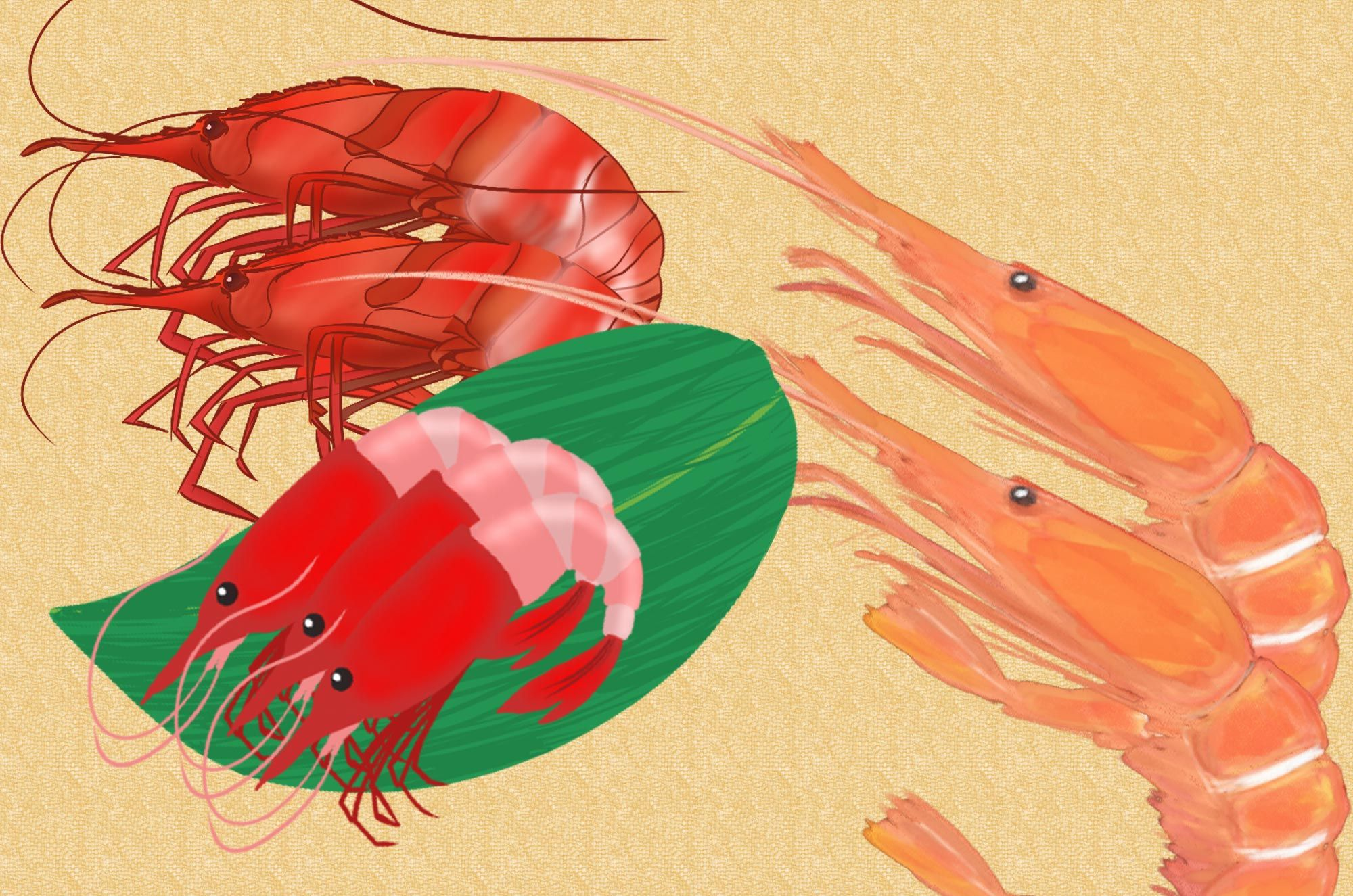 エビのイラスト素材新鮮な海老がいっぱい可愛い海老からお寿司
