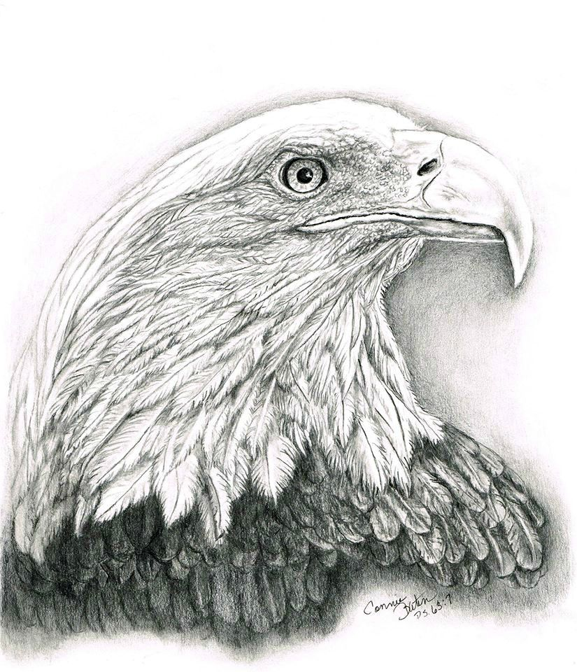 """Waiting to Soar"" Graphite portrait of Bald Eagle.. based upon Isa. 40:31 ""Those who WAIT..."" by c baten"
