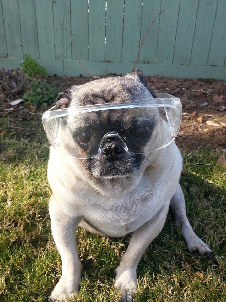 Dog Melanoma Lazer Eye Pictures