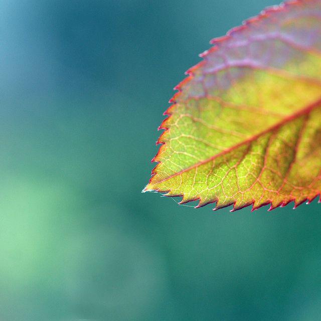leaf | Flickr - Photo Sharing!