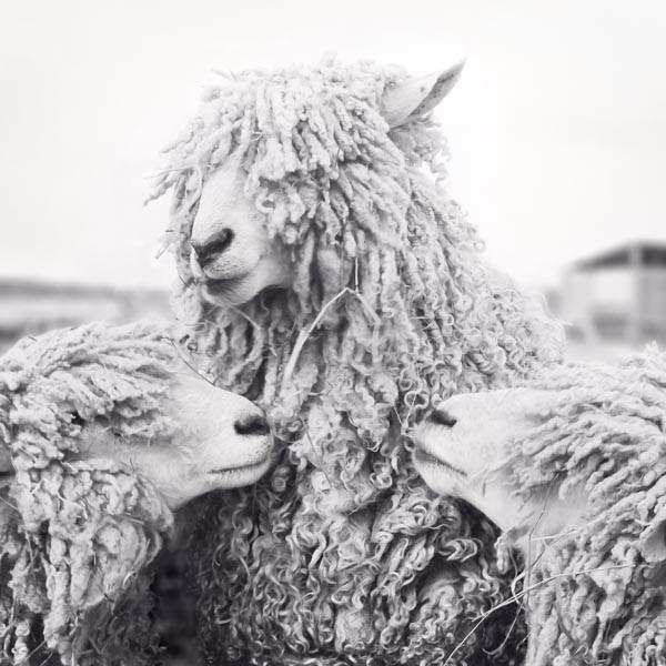 Fine art photo set of 4 prints black and white animal photographs by allison trentelman