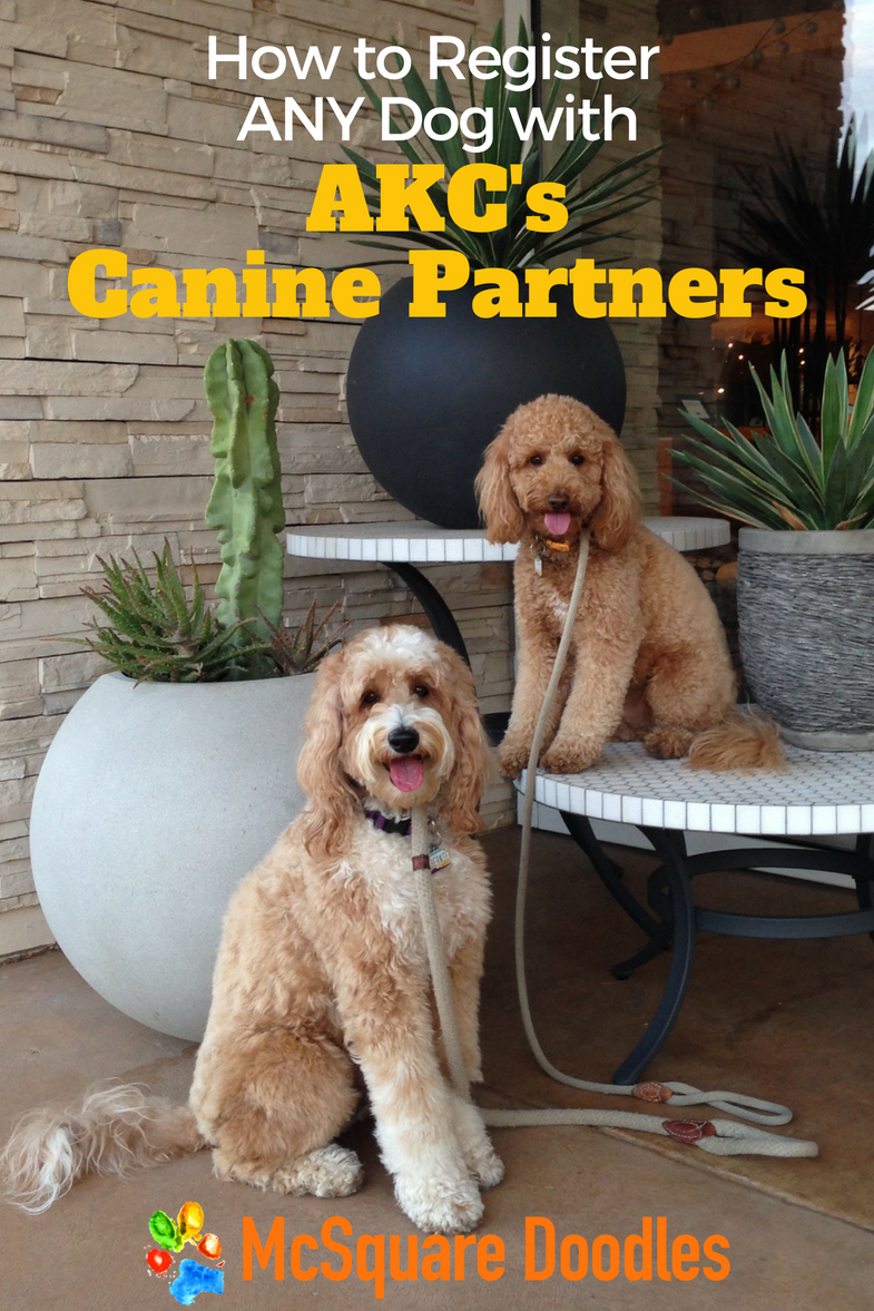 How to Register Your Dog for AKC Canine Partners | McSquare