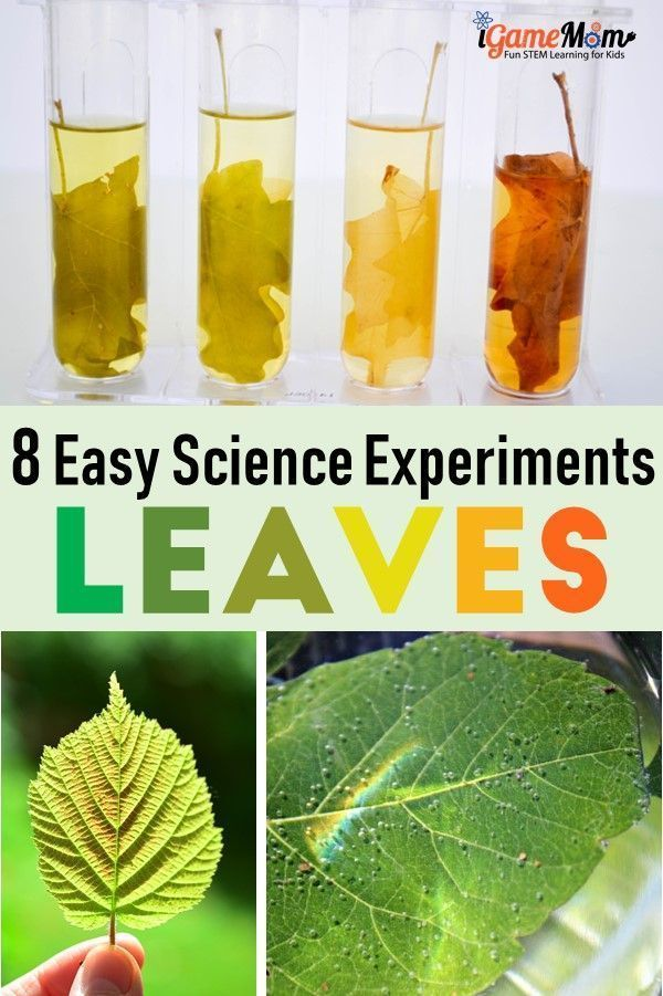 Fun Science Activities for Kids About Leaves Leaf Science experiment projects for Kids. Why leaves are green? Why leaves change color? Fun STEM activities for kids to learn about trees and plant life cycle and parts of plants. For preschool to grade 6 | nature | Fall Winter scienceLeaf Science experiment projects for Kids. Why ...
