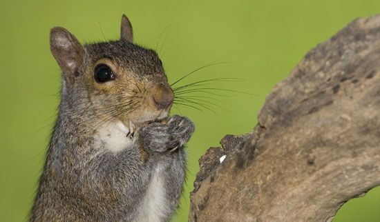 Secret Squirrel Protect Your Nuts Patch: How To Keep Squirrels Out Of Your Garden