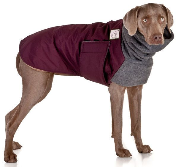 Pictures Of Dogs In Winter Clothes