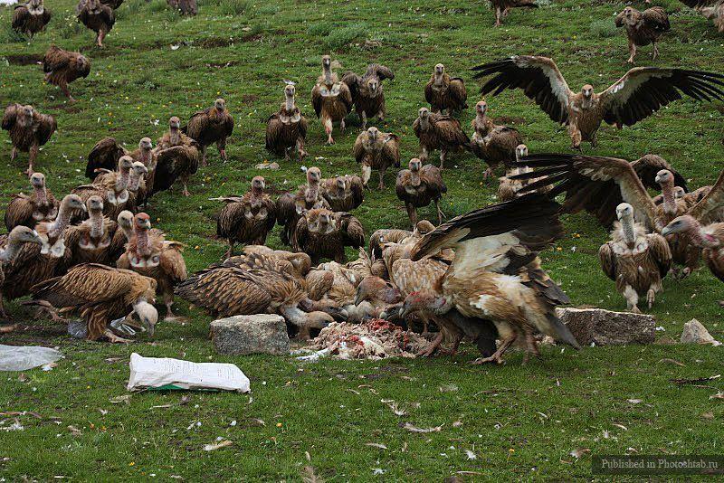 Rituels funéraires : Sépulture céleste  au Tibet (vidéo) By Jack35 B95f82ee0dc907f4b4d0559d10e4d5b1