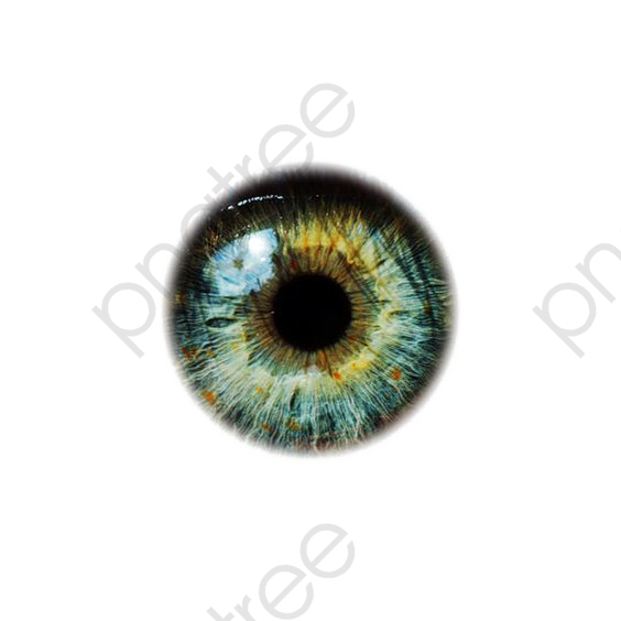 Eyeballs Eye Drawing Iris Painting Eye Art